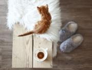 Ako vyčistiť koberce a čalúnený nábytek